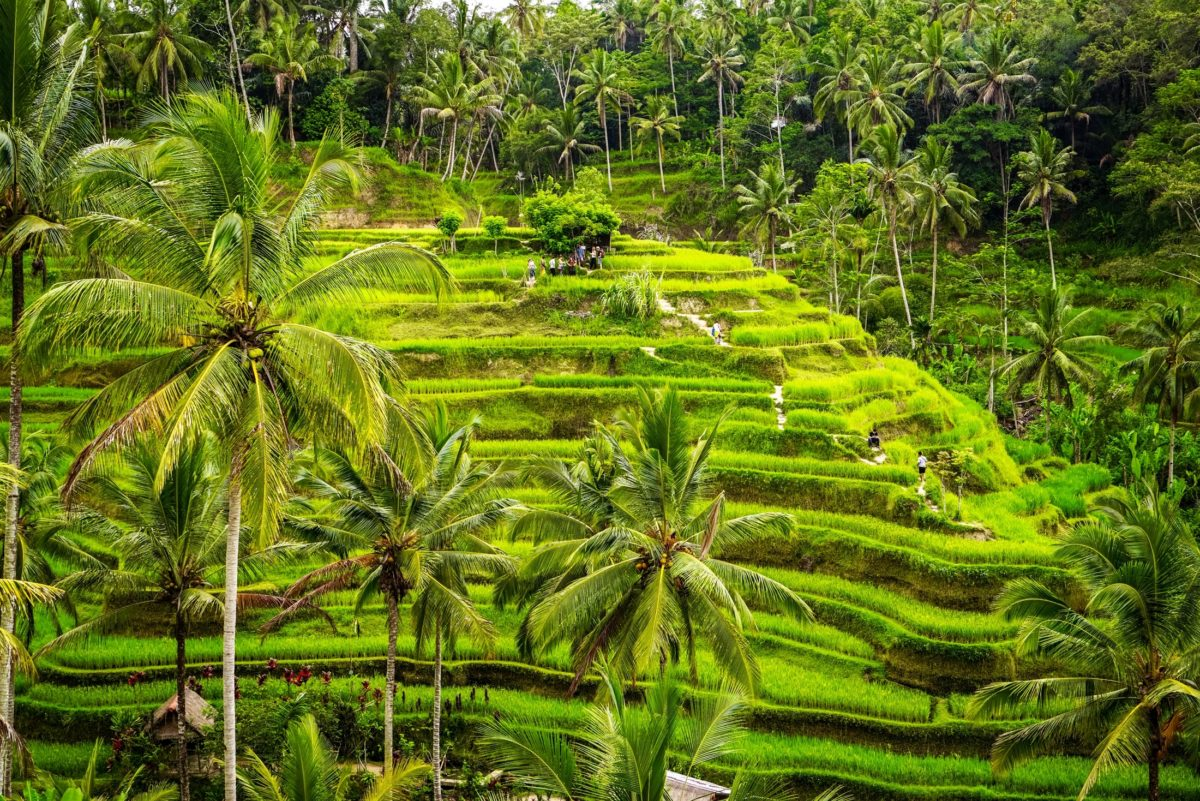 Ubud – A Town That Reflects the Tradition of Bali