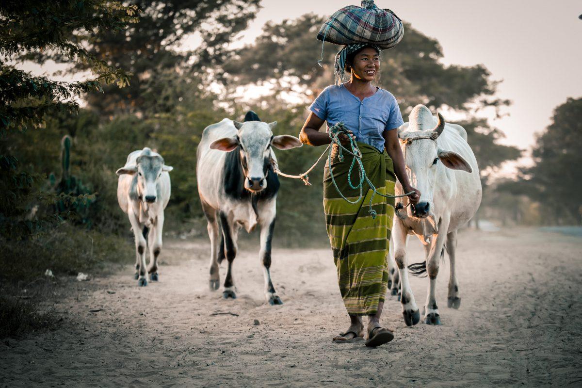 Myanmar facts
