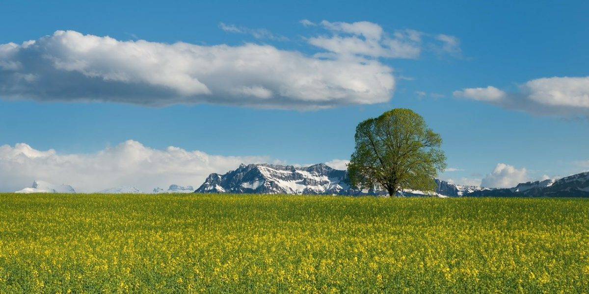 115 Switzerland Quotes and Captions That Tells Us All About its Beauty!