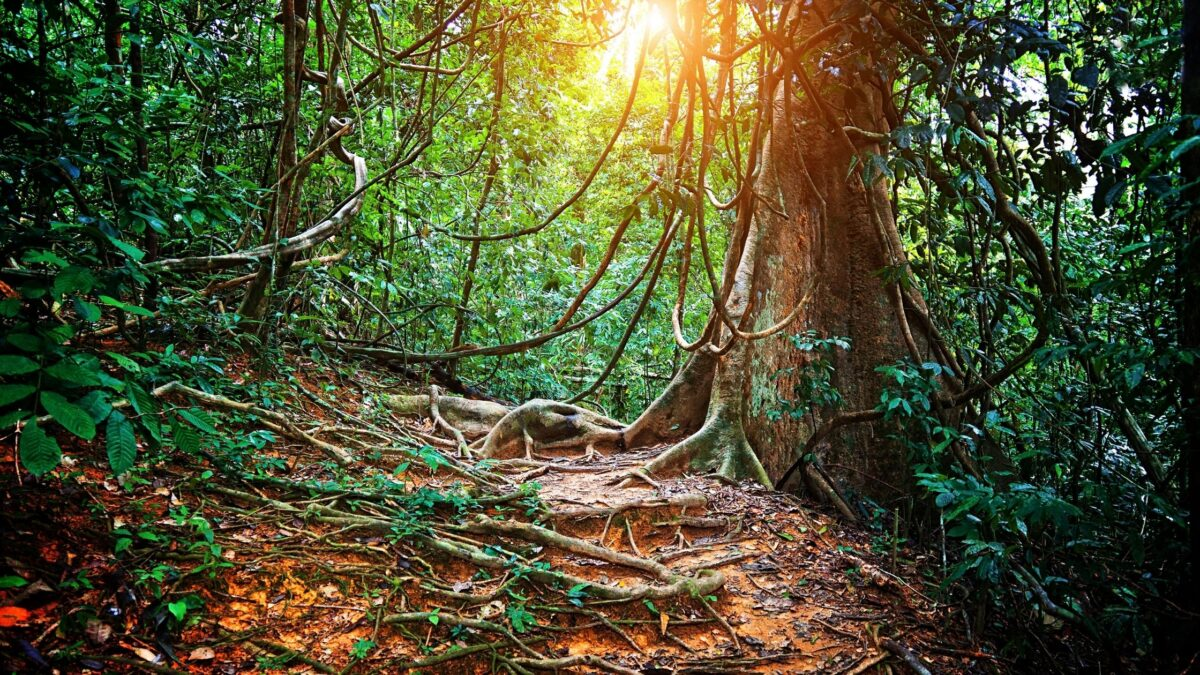 6 Most Beautiful Forests to Explore Around the World
