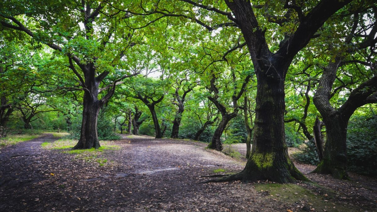Epping forest walks