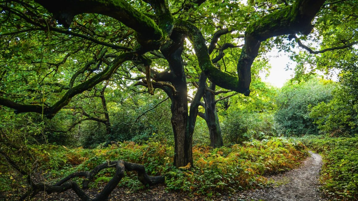 Epping Forest Walks - A Splendid Getaway From London For Hikes