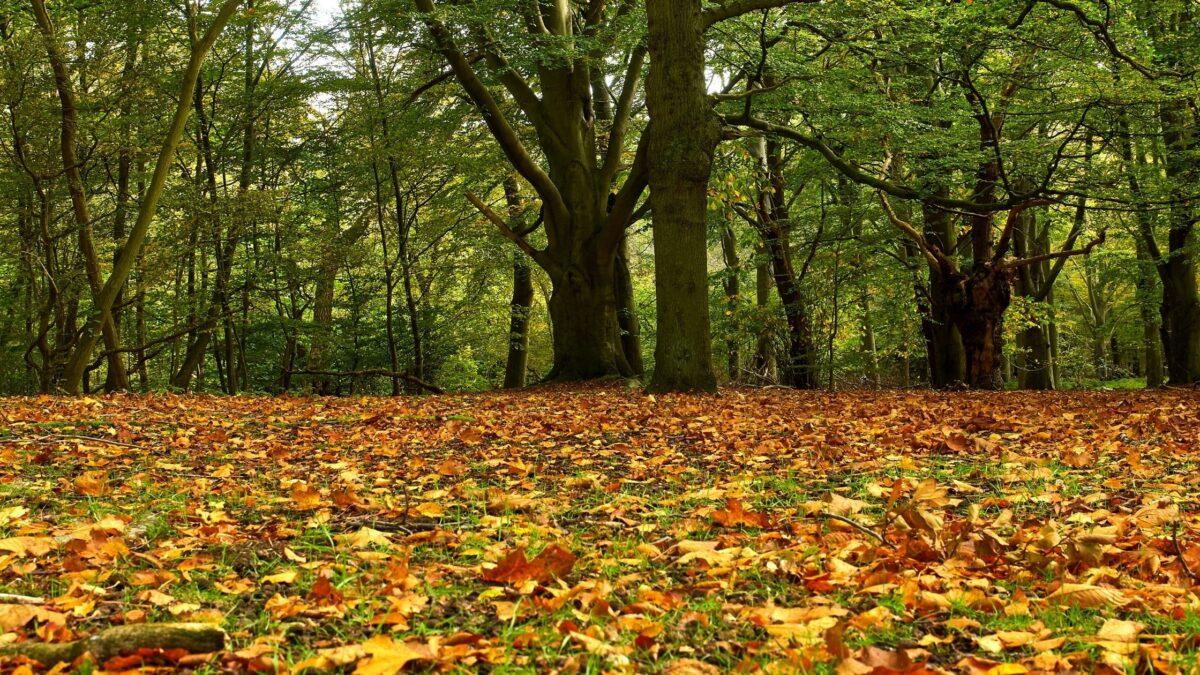 forest information