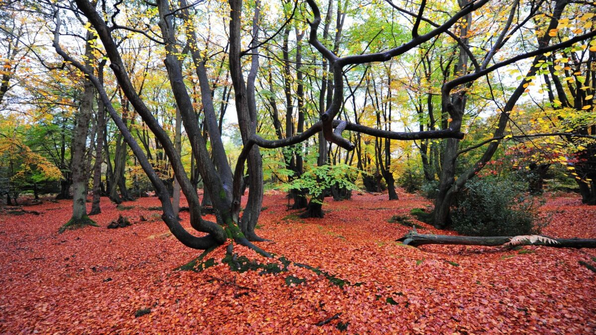 the oak trail epping forest walks