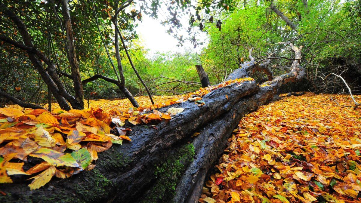 best walks epping forest