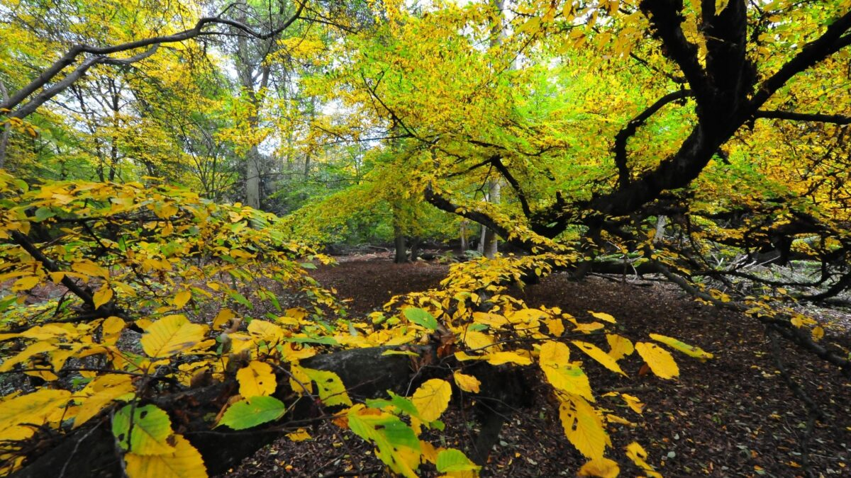 beech trail epping forest